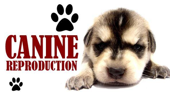 Picture of Explore Vet Nursing: Canine