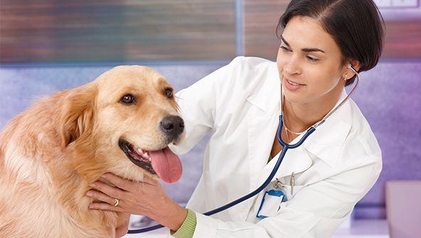 Picture of Explore Vet Nursing: Practical Skills